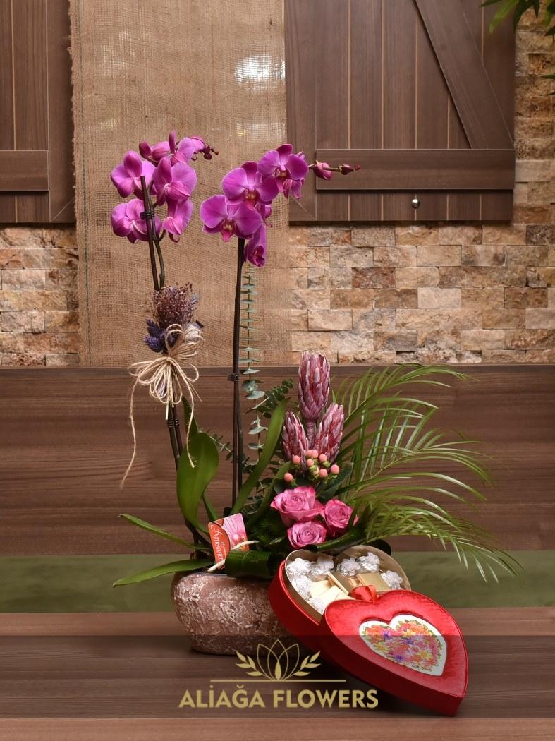 orkide 001